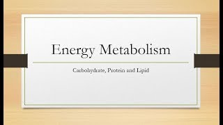 Energy Metabolism: Carbohydrate, Protein and Lipids