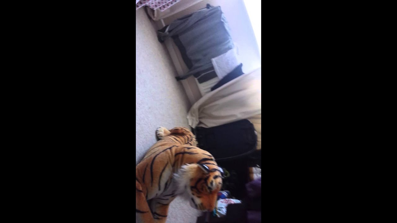 Could not A tiger is fucking a girl