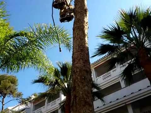 Espuelas spikes para trepar climb arboles trees parte 1 for Como talar un arbol