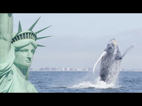 Humpback Whales Return To New York | Cities: Nature's New Wild | BBC Earth