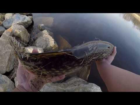 Spring Fishing The Oconto River