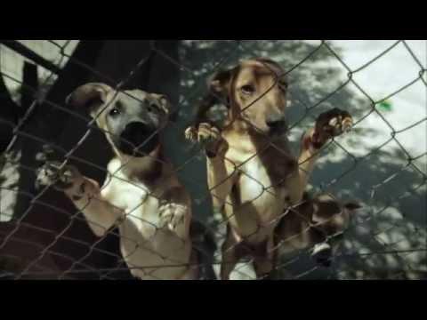 Ark Animal Centre – Puppy Shelter | SMS