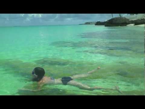 Lemon Shark - Bimini Bay Beach - Bimini, Bahamas