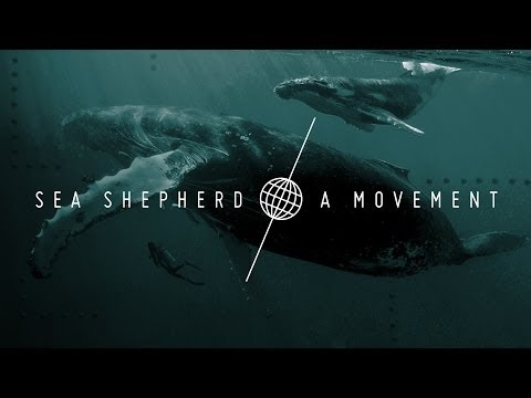 Sea Shepherd: A Movement