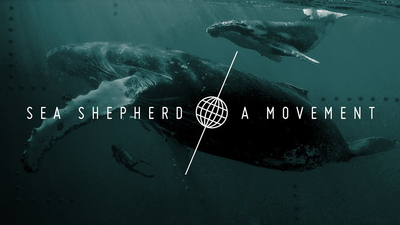 Iphone 7 Wallpaper Default Sea Shepherd A Movement Youtube