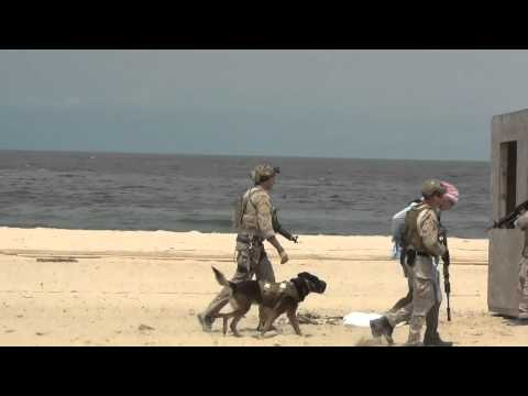 Navy SEAL Service Dog Takedown
