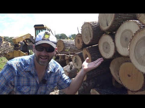 $$$ HOW MUCH MONEY ARE WE MAKING FROM CUTTING OUR TIMBER..HOW WILL WE SPEND IT?
