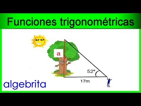 Encontrar la altura de un rbol en base a su sombra for Cuanto mide un arbol