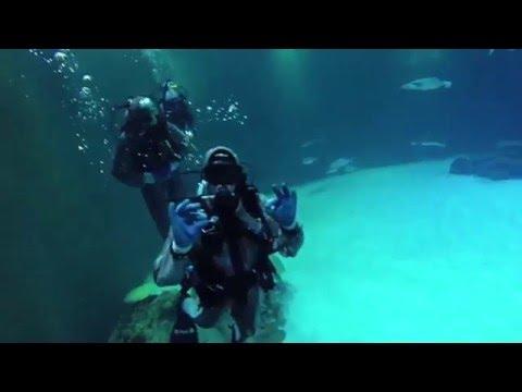 Shark Dive - Mandalay Bay, Las Vegas