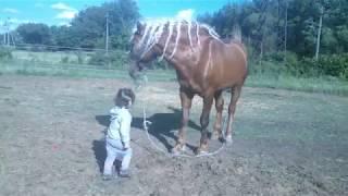 Маленькая девочка из рук кормит коня