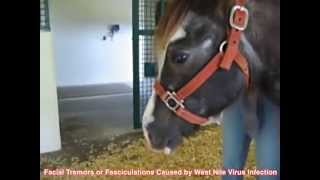 Horse With West Nile Virus