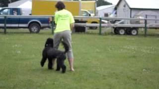 Bemidji Game Fair And Pet Expo. Canine Freestyle (paul Bunyan Dog Training Association)