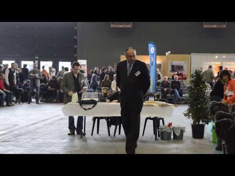 Kortrijk   2013 - Bouvier des Flandres