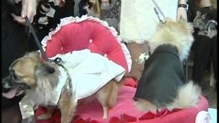 Первая свадьба собак в Хабаровске.