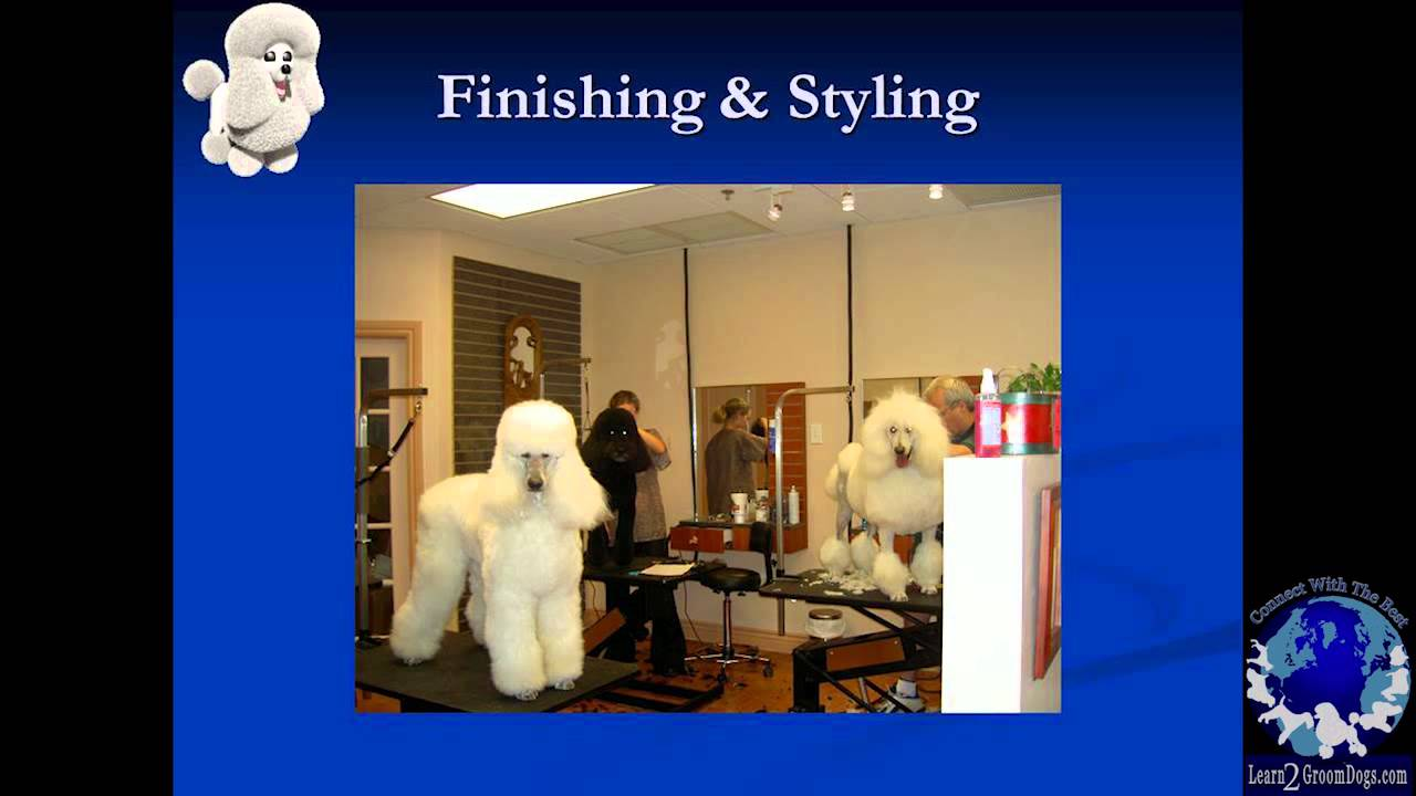 Pet Grooming Salon Design Youtube