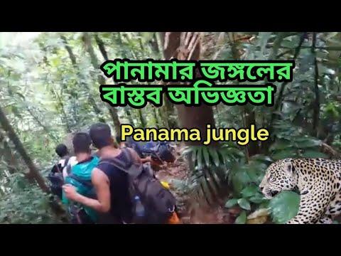 পানামা জঙ্গলে যা দেখেছিলাম   Experience Of Panama Jungle   Most Dangerous Jungle   অবৈধ পথে আমেরিকা