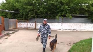 В Тамбове полицейские с помощью служебной собаки задержали подозреваемых в разбойном нападении