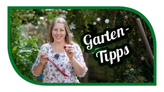 Aussaat & Gartentipps im Juni 🍅 Hitzewelle 2019 💦 richtig  Mulchen und Wasser sparen