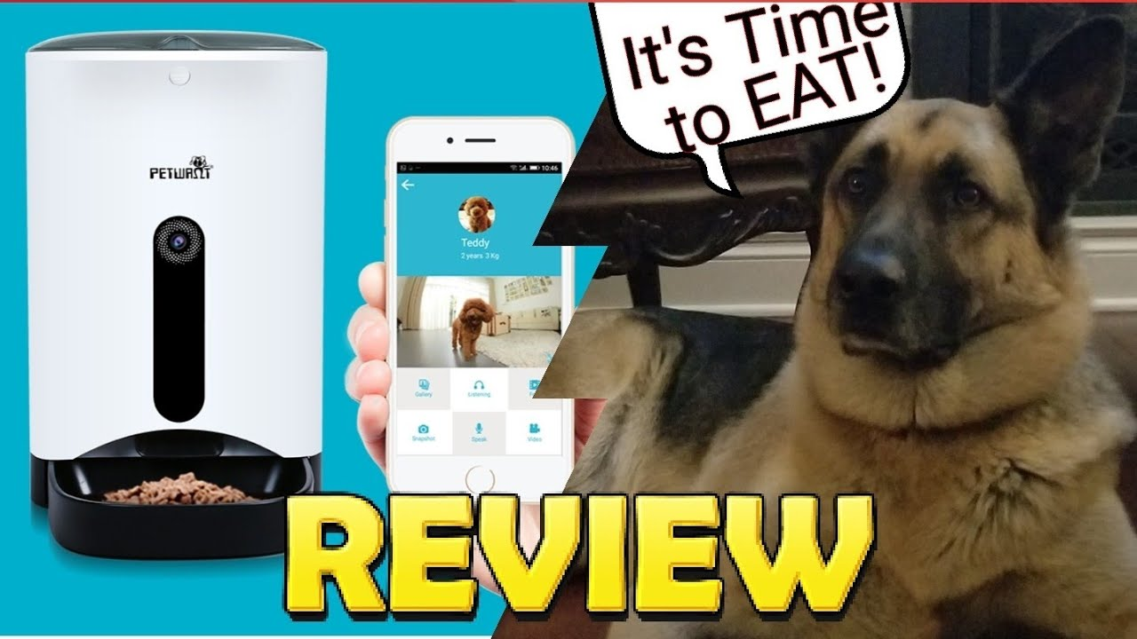 meal angelas review petsafe self feeders best box dogs pet automatic feeder for cleaning litter