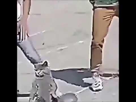 Ringtone cat meme distorted fortnite dances