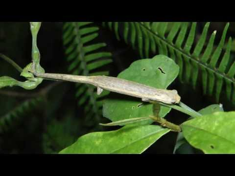 Costa Rican Wildlife 2014 - Day 2: Amphibians, Birds, Insects & Howler Monkeys