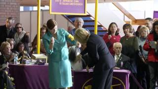 2014 Westminster Kennel Club: Havanese Class