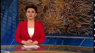 Вести-Ярославль от 27.05.17 8:00