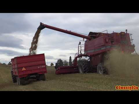 4K| CASE IH Axial-Flow 2388 Combine Harvesting Wheat 2017