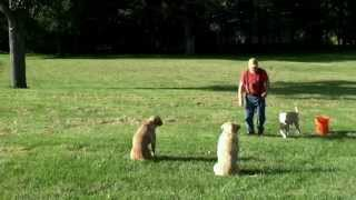 "Three Dog ""remote Drop Drill"" - Yearly Review"