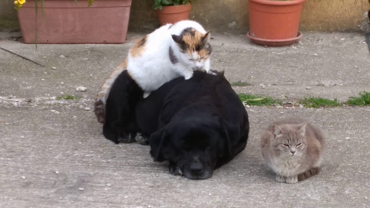 Cane E Gatto Chi Lha Detto Che Non Si Può Youtube