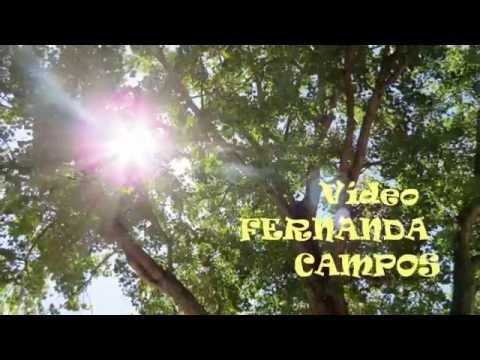 ÁRVORE & SOL / TREE & SUN - Parque Abadias / Figueira da Foz - Portugal
