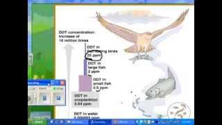 2014 HN Ecology 03 biological magnification