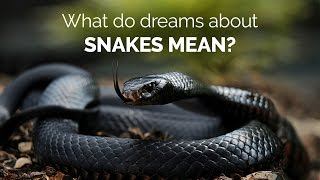 What do dreams about snakes mean | spiritual enlightenment