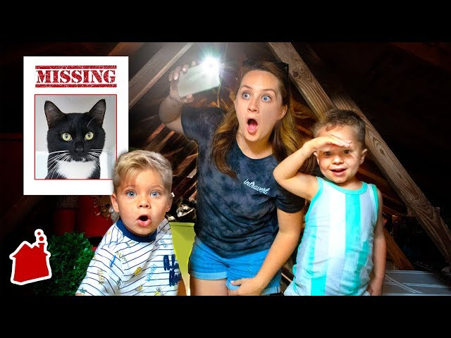 Lost Our Cat In A Secret Attic Room! 😢