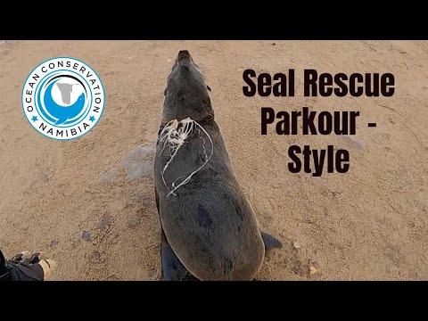 Seal Rescue Parkour