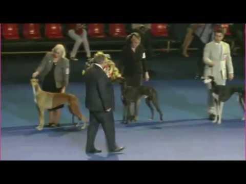 Euro Dog Show 2012 Bucharest X group