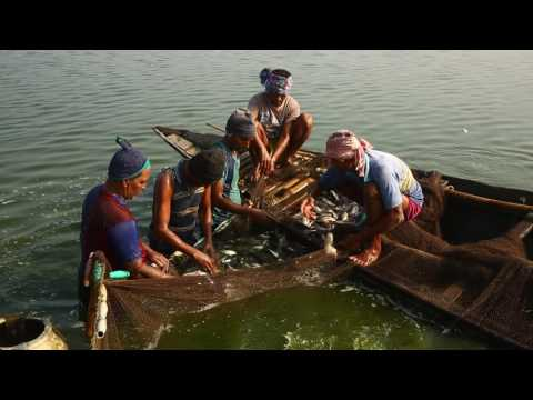 UNITED VOICES , SUSTAINABLE SOLUTIONS - a short environmental documentary on East Kolkata Wetland