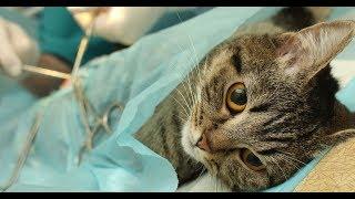 Бесшовная стерилизация кошек и собак I подготовка к стерилизации и уход