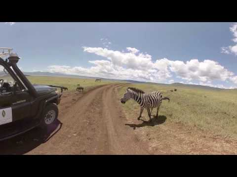 360 4K VR Video of Wildlife at Ngorongoro Crater, Tanzania