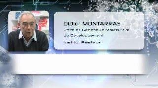 S01-E06 - Didier Montarras, Les cellules souches et leur régénération