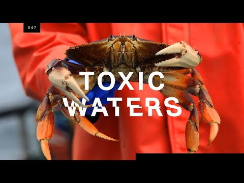 Who's to blame for the neurotoxin that's poisoning the Pacific?