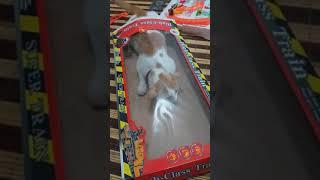 Download Kucing lucu,si cantij lucu Mp3