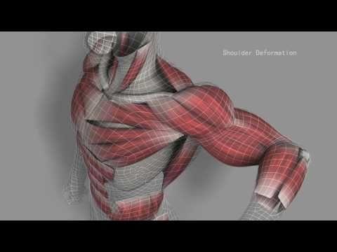 Digital Muscles