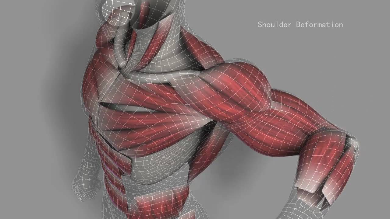 Riging Showreel - Muscle Simulation - YouTube