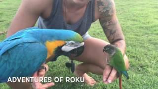 Pet Parrot Mania 2