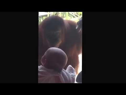 Orangutan smiles at baby (cutest moment ever)