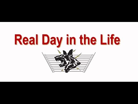 electric-guard-dog---real-day-in-the-life