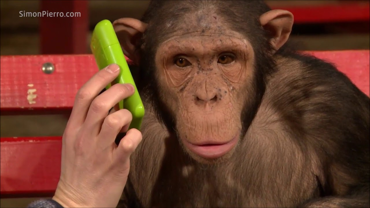 Monkeys React to Magic