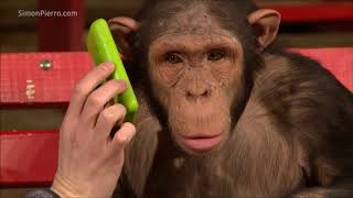 Download Monkeys react to magic Mp3 and Videos