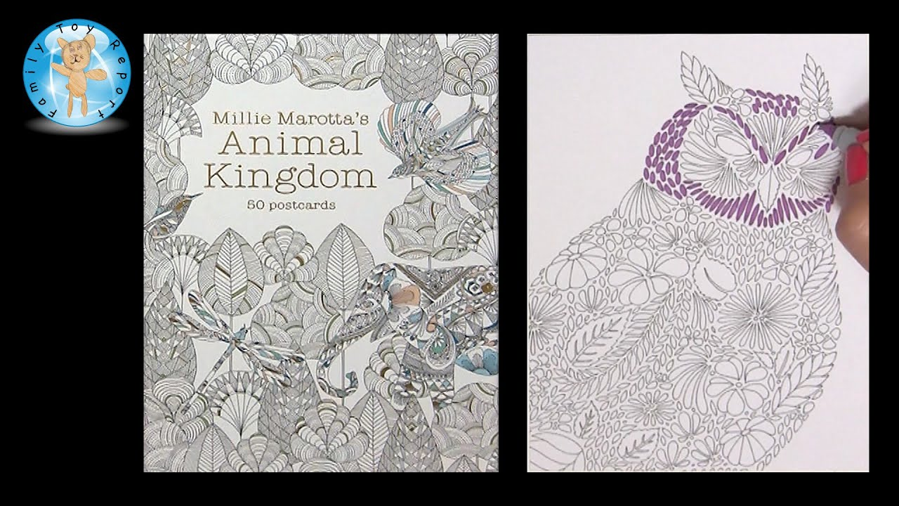 Millie Marottas Animal Kingdom 50 Postcards Adult Coloring Book Owl